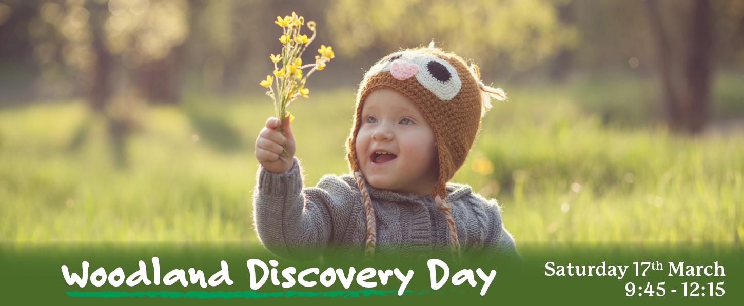 Woodland Discovery Day